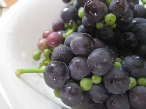 first little grape harvest - next year I'm thinking jelly